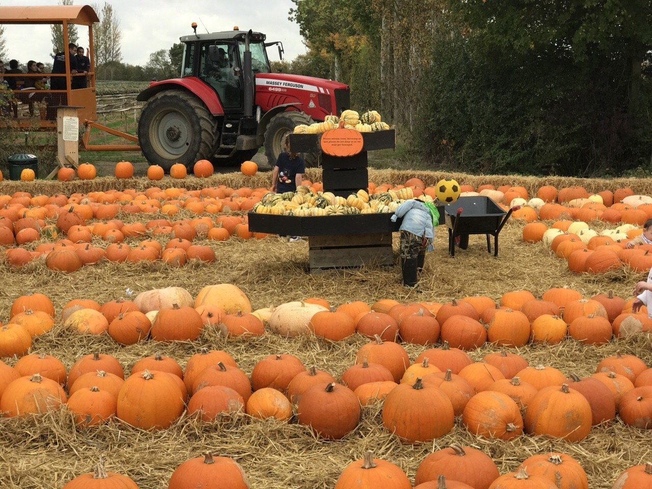 Pumpkin Picking In Essex tractor